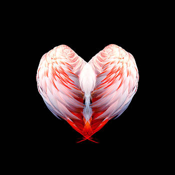 Flamingo Feathers Love Special Edition by Mandy Elliott