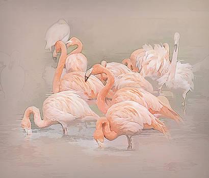 Flamingo Fun by Brian Tarr