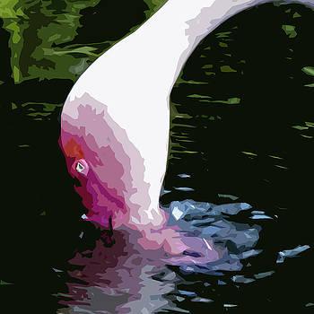James Hill - Flamingo