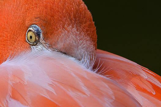 Ken Barrett - Flamingo Eye