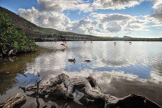 Flamingo lagoon - Floreana island by Henri Leduc
