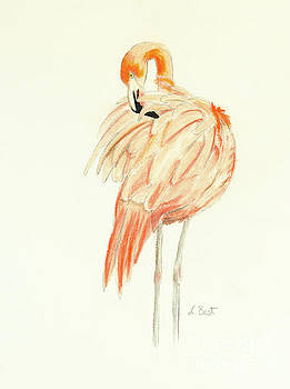 Flamingo by Laurel Best