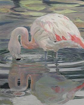 Flamingo by Marty Smith