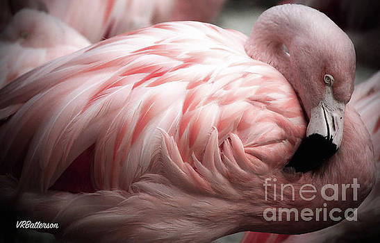 Flamingo Memphis Zoo by Veronica Batterson