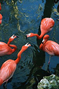 Kathi Shotwell - Flamingo Party 2