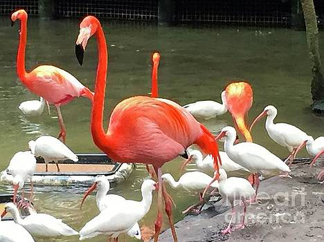Flamingo Party by Beth Saffer