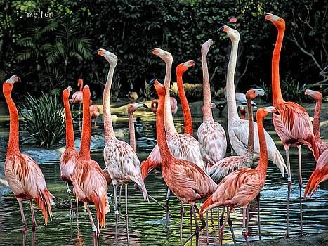 Flamingo Pink by Jack Melton