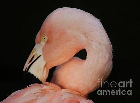 Paulette Thomas - Flamingo Portrait