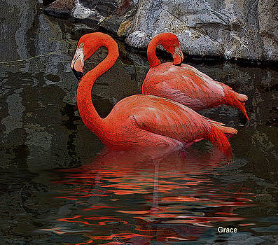 Flamingo Reflections by Julie Grace