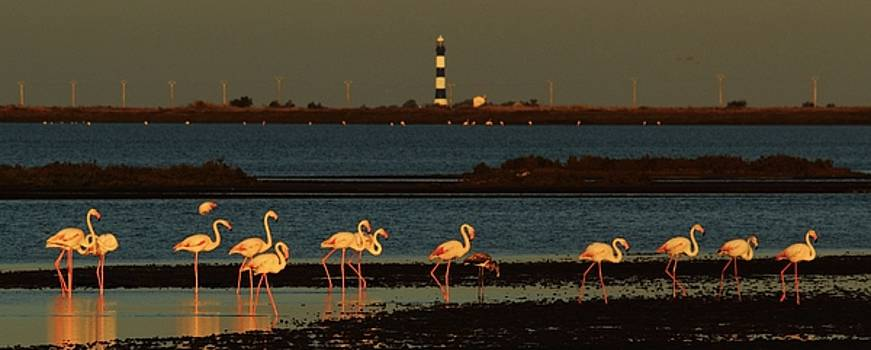 Flamingo Sunrise by Richard Patmore