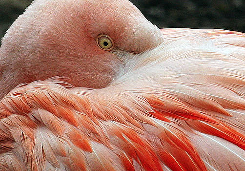 Flamingo Two by Brian M Lumley