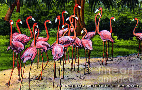 Flamingo Vintage Postcard by Jennifer Capo