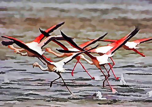 Dennis Cox - Flamingoes