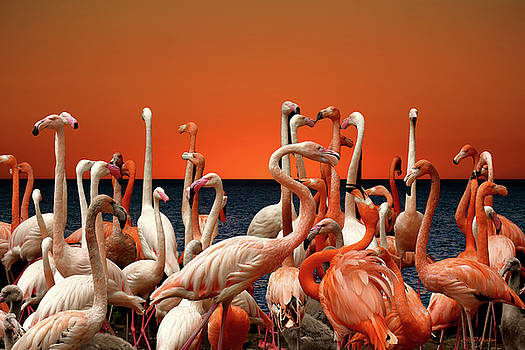 Flamingos at the Cape by Ericamaxine Price