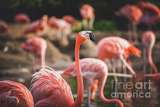 Flamingos Drinking in a Pond by Leslie Banks