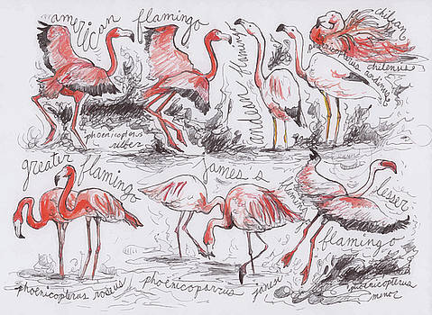 Flamingos by Hannah Dean