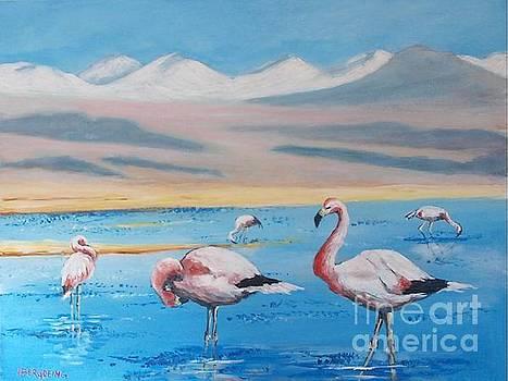 Flamingos by Jean Pierre Bergoeing