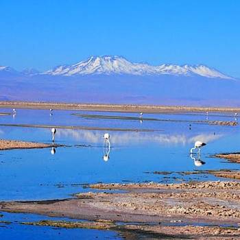 Flamingos On The Salt Flats I'm The by Dante Harker