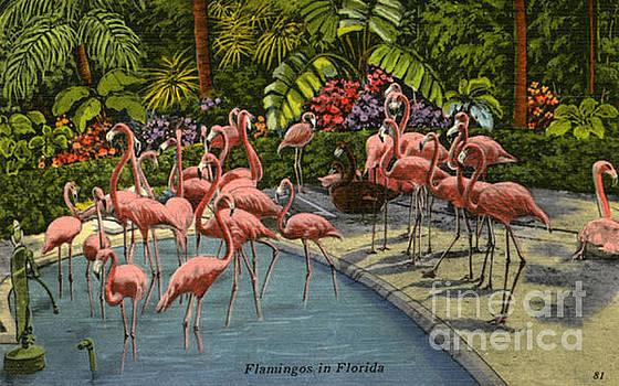 Flamingos Vintage Postcard by Jennifer Capo