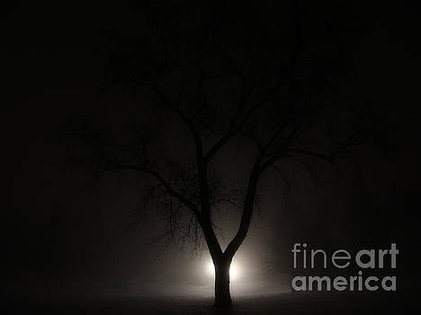 Fleeting Moment The Tree Fog by Mike Bruckman