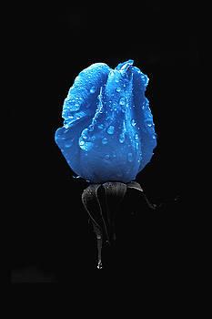 Daniel Furon - Fleur Bleue After the Rain