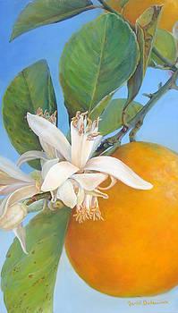 Fleurs d oranges by Muriel Dolemieux