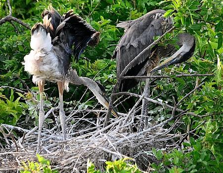 Patricia Twardzik - Flexible Feathered Fledglings