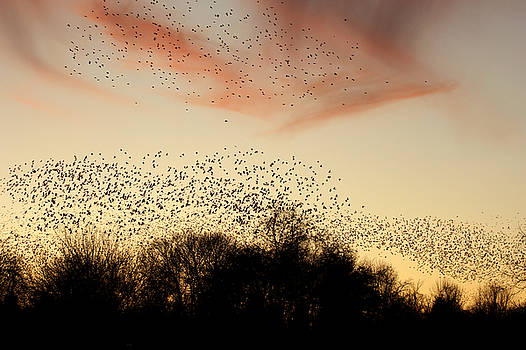 Flight At Sunset by Off The Beaten Path Photography - Andrew Alexander