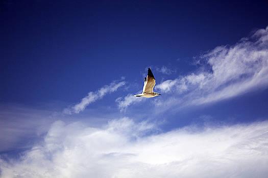 Flight in the Blue Sky by Kristen Vota