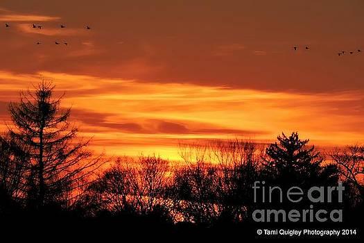 Tami Quigley - Flight Into Sunset