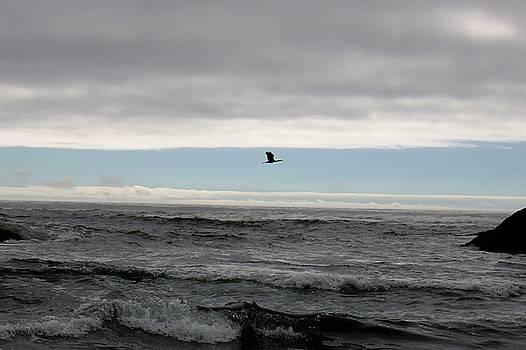 Flight by Lawrence Birk
