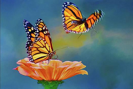 Nikolyn McDonald - Flight - Monarch Butterfly