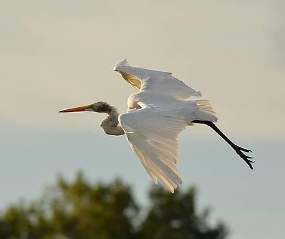 Patricia Twardzik - Flight of a New Egret