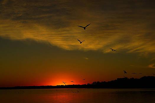 Flight of Dawn by Jann Kline