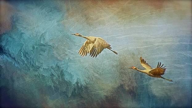 Flight of Fantasy, Sandhill Cranes by Flying Z Photography By Zayne Diamond