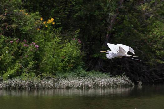 Flight of the Egret 1 by Dan Ferrin