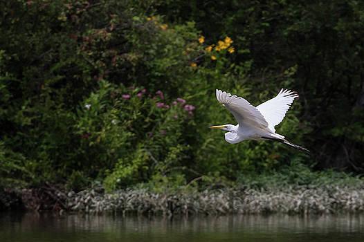 Flight of the Egret 2 by Dan Ferrin