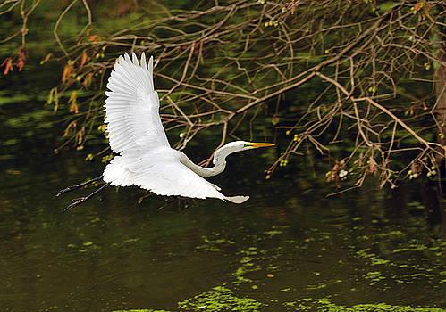 Flight Of The Egret by Jamie Pattison