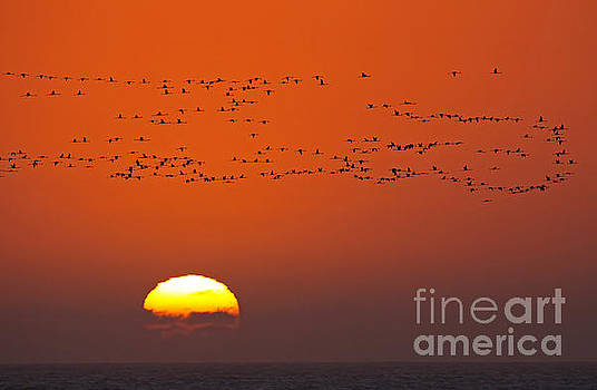 Flight of the flamingoes, Africa by Wibke W