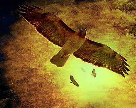 Wingsdomain Art and Photography - Flight of the Golden Hawks . 7D5066