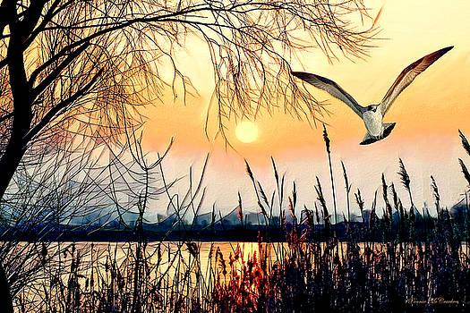 Flight of the Hawk by Pennie McCracken