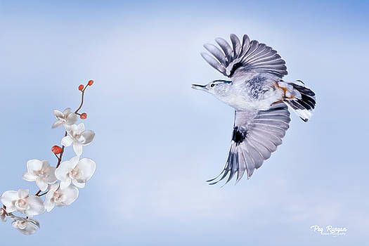 Flight of the Nuthatch by Peg Runyan
