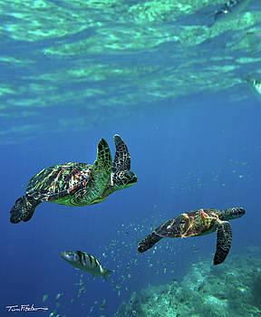 Flight of the Sea Turtles by Tim Fitzharris
