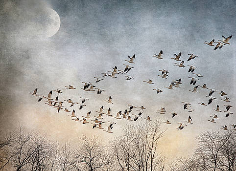 Flight Of The Snow Geese by Pat Abbott