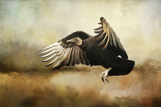 Flight Of The Vulture by TnBackroadsPhotos