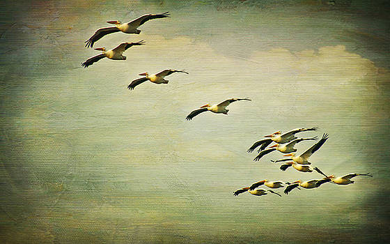 Flight of the White Pelicans by Joan McCool