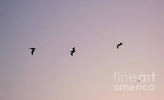 Felipe Adan Lerma - Flight of Three