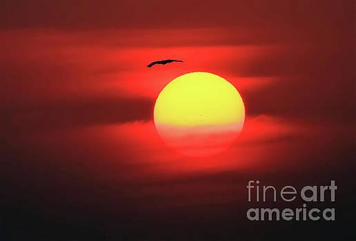 Flight to the Sun by Roger Becker