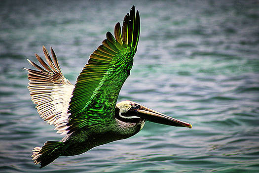 Flight by Todd Dunham