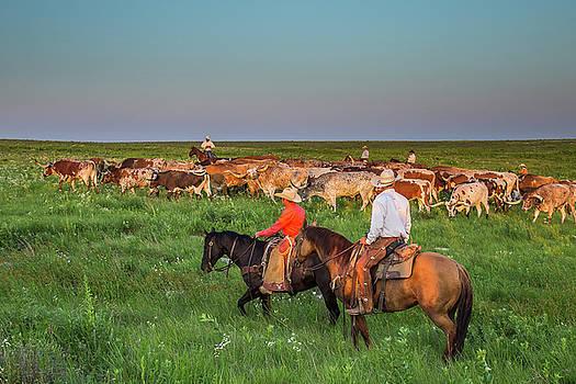 Flint Hills Cattle Drive by Steven Bateson